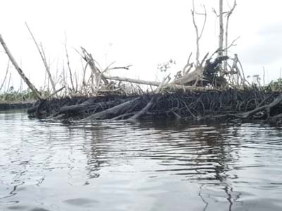 Oil damage Niger Delta
